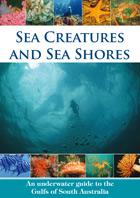 Sea Creatures and Sea Shores